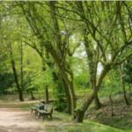 Goldsteinpark im Frühling